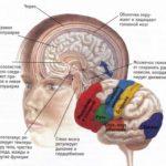Интересные факты о нервной системе человека