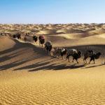 Интересные факты о пустынях