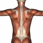 Интересные факты о мышцах