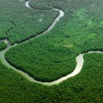 Интересные факты ореке Амазонке