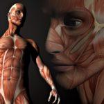 Интересные факты о человеческом теле для детей