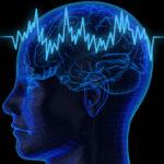 Интересные факты о мозге для детей