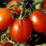 Интересные факты о помидоре