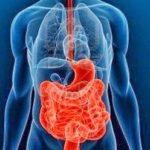 Интересные факты о пищеварительной системе