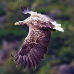 Интересные факты об орлах