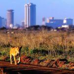 Интересные факты о Кении