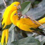 Где живут попугаи(места обитания) ?