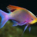 Где живут рыбы (места обитания) ?