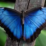 Что едят бабочки ?