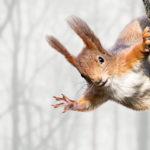Сколько живут белки в дикой природе ?