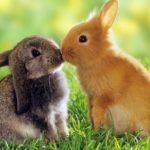 Что едят кролики ?