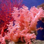 Где живут кораллы (места обитания) ?