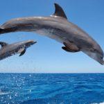 Сколько живут дельфины ?