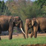 Где живут азиатские слоны (места обитания) ?