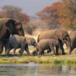 Что едят слоны ?