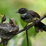 Где живут птицы (места обитания) ?