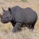 Где живут черные носороги (места обитания) ?