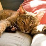 Где живут кошки (места обитания) ?