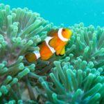 Где живут Рыбы-клоуны (места обитания) ?