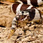 Что едят змеи ?