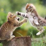 Где живут котята (места обитания) ?