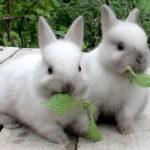 Сколько живут кролики ?
