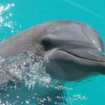 Что едят дельфины ?