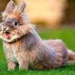 Сколько живут кролики  в неволе ?