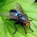 Где живут мухи (места обитания) ?