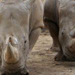 Где живут носороги (места обитания) ?