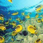 Где живут рыбы-бабочки (места обитания) ?