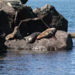Где живут тюлени (места обитания) ?