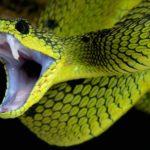 Сколько живут змеи ?