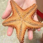 Где живут морские звезды (места обитания) ?