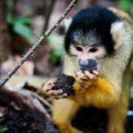 Что едят обезьяны ?