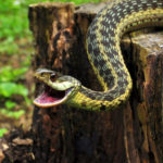 Сколько живут змеи в неволе ?