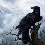 Сколько живут вороны ?