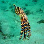 Какие животные едят осьминогов ?