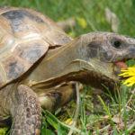 Что едят черепахи ?