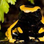 Что едят древесные лягушки ?