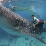 Что едят китовые акулы ?