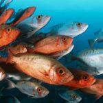 Что едят рыбы ?