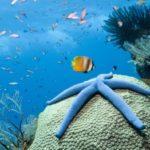 Что едят морские звезды ?