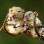 Что едят мыши ?