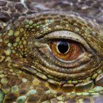 В чем разница между рыбой и рептилиями ?