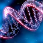 Сколько ДНК находится в  человеческой клетке ?
