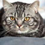 Почему у кошки выпадает шерсть ?