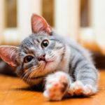 Сколько живут кошки ?