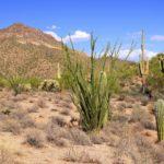 Как растения приспособились к жизни в пустыне ?