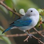 Что едят птицы ?